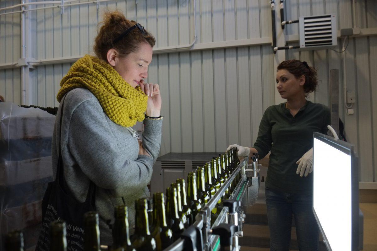 wine armenia volunteering